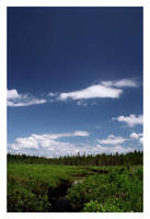 Spruce Bog Two by TheOne85Ca