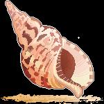 F2U Seashell Pixel 4