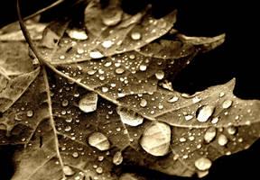 Foliage by ellen92