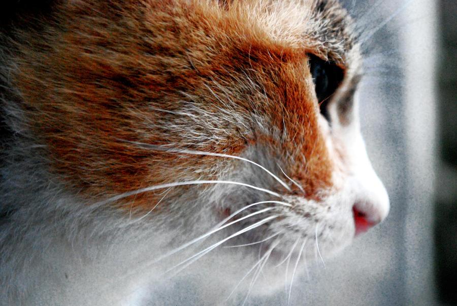 Foudrys Werkstatt 2015 Cat_by_vhttml-d33kaak