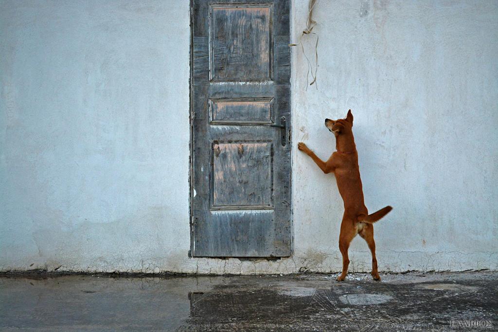 Curiosity.... by eamfos