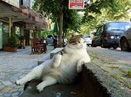 A cat that enjoys seeing passers by in Turkey.