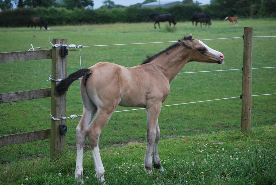Foal Stock 1 by equinestudios