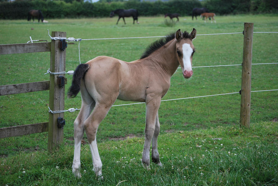 Foal Stock 2 by equinestudios