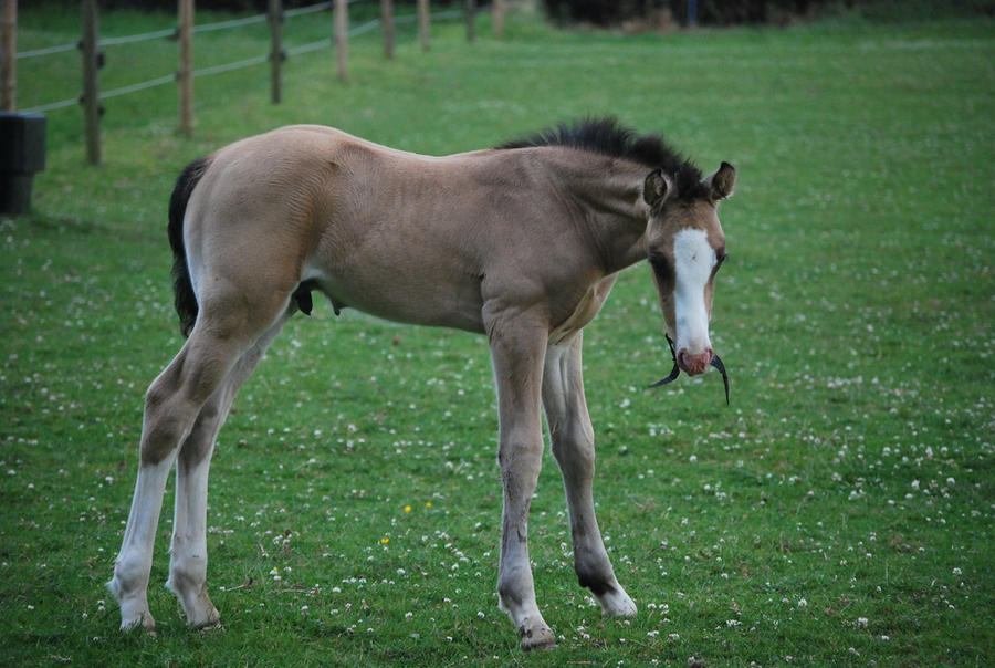 Foal Stock 13 by equinestudios