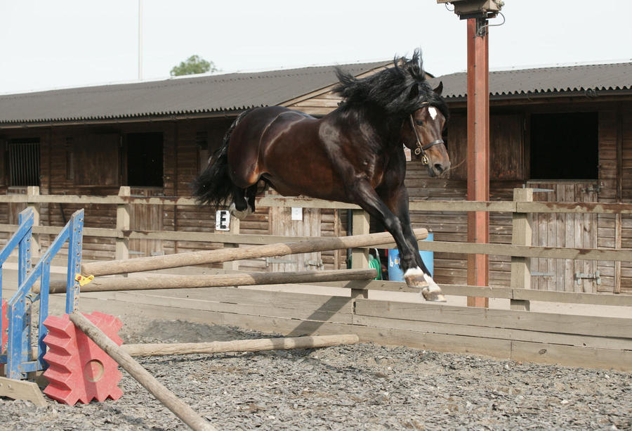 Dark Bay Stallion Stock 7 by equinestudios