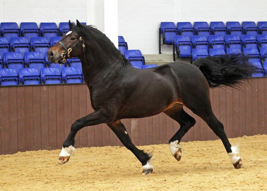 Gof 5 by equinestudios