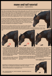 Mane and Tail Tutorial August 2013