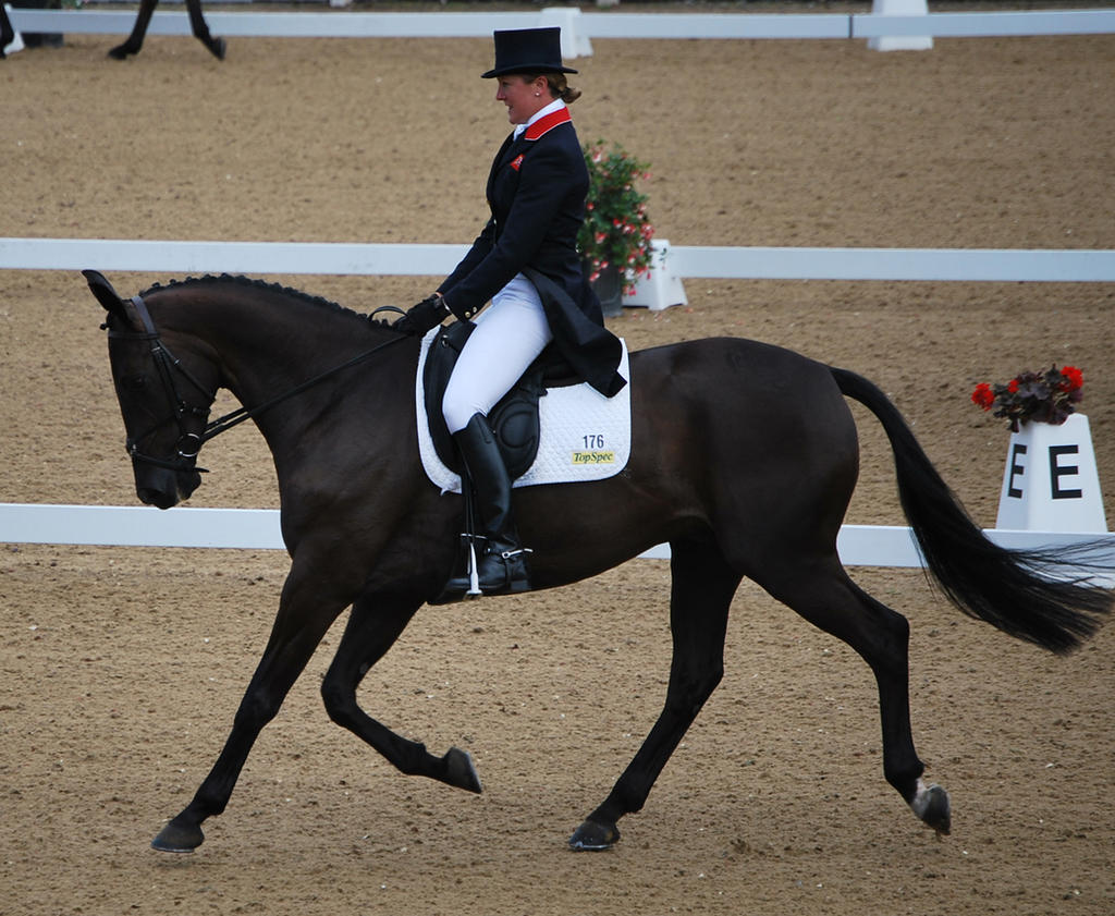 Dressage 30 by equinestudios