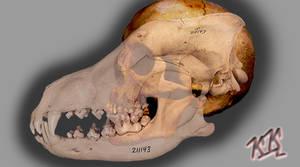 Wolf-Man Skull. Project