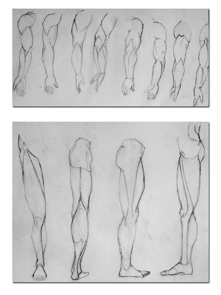 arm and leg anatomy diagrams by kmaier99 on DeviantArt