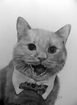 Friend's Cat Mocha