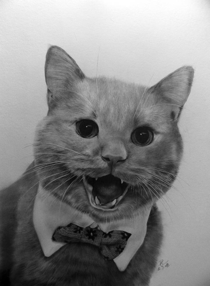 Friend's Cat Mocha by paullung