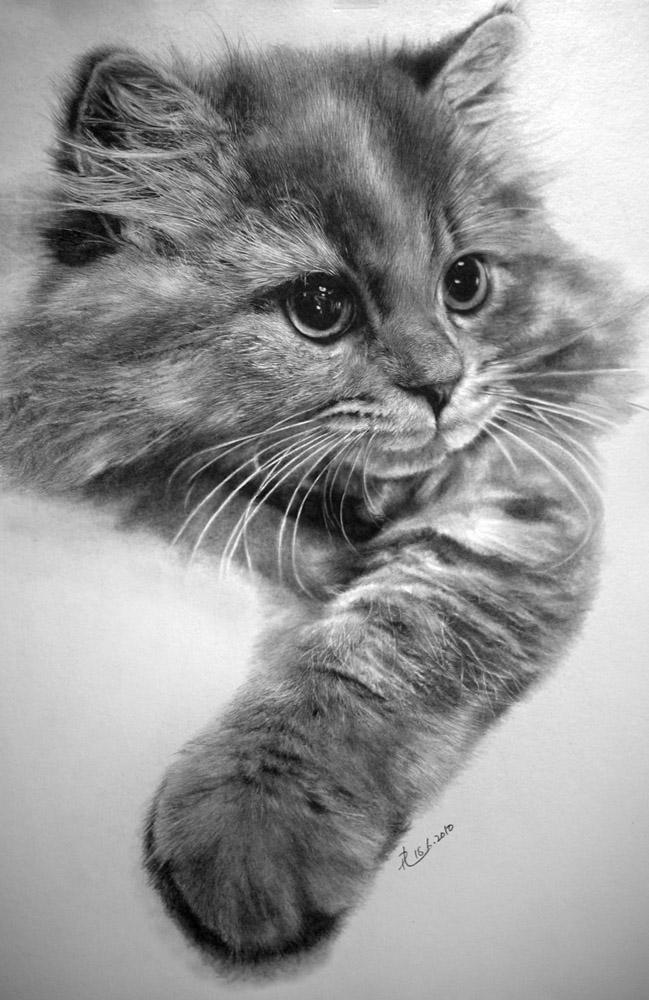 paul lung cat drawings 2 thumb Incredibly Photorealistic Pencil drawings of Cats...