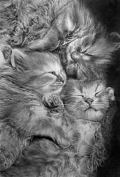 3 Babies Cats by paullung