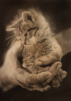 hand and cat