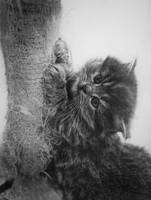 CatBB-Finish by paullung