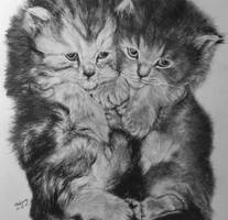 Baby Cat by paullung