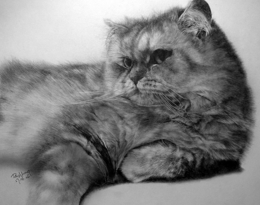Cat drawing for Calendar 10pcs by paullung