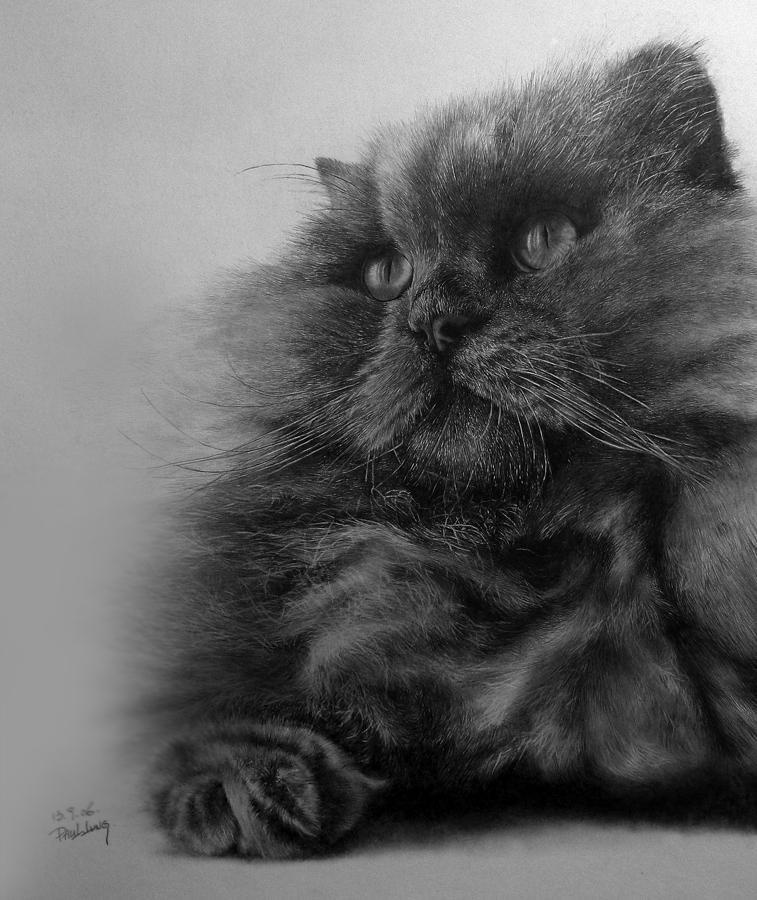 素描猫 可爱 步骤