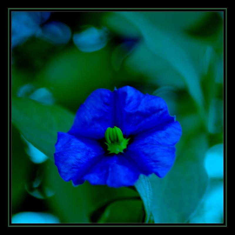 Feeling Blue II by FilipaGrilo