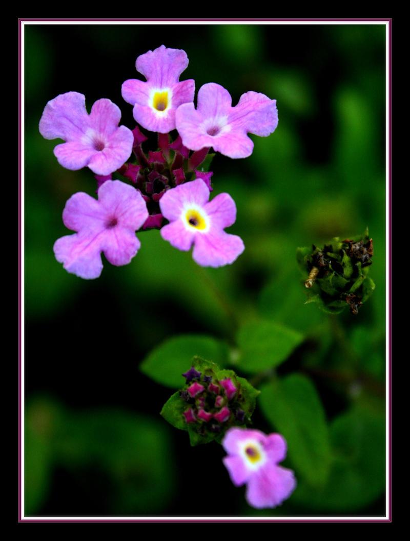 Little Flowers by FilipaGrilo