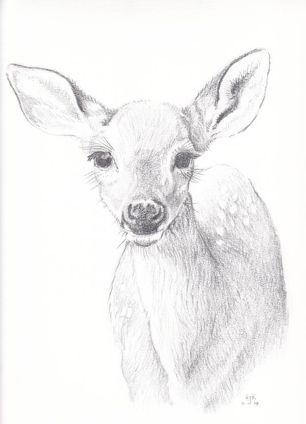 Whitetail - faw... Whitetail Buck Drawings