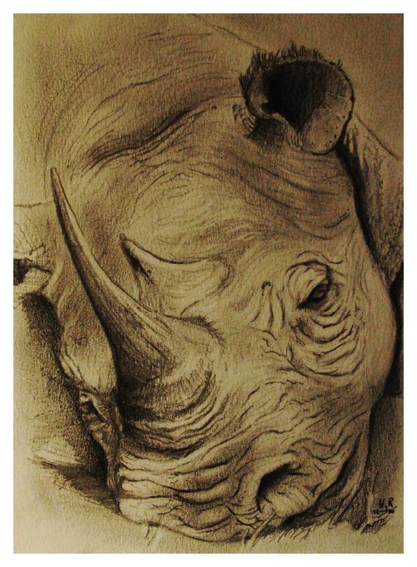 Rhino sleeping by HalfJackRun