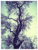 Tree of Jack