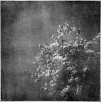 Holga Blossoms   Bromoil by silversmith