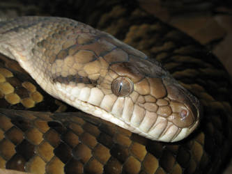 Snake Eye by MJaaay