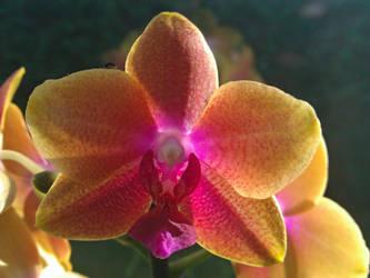 Sunshine Flower by MJaaay