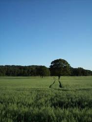 Hexham Fields One