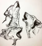 Three Wolves Howling