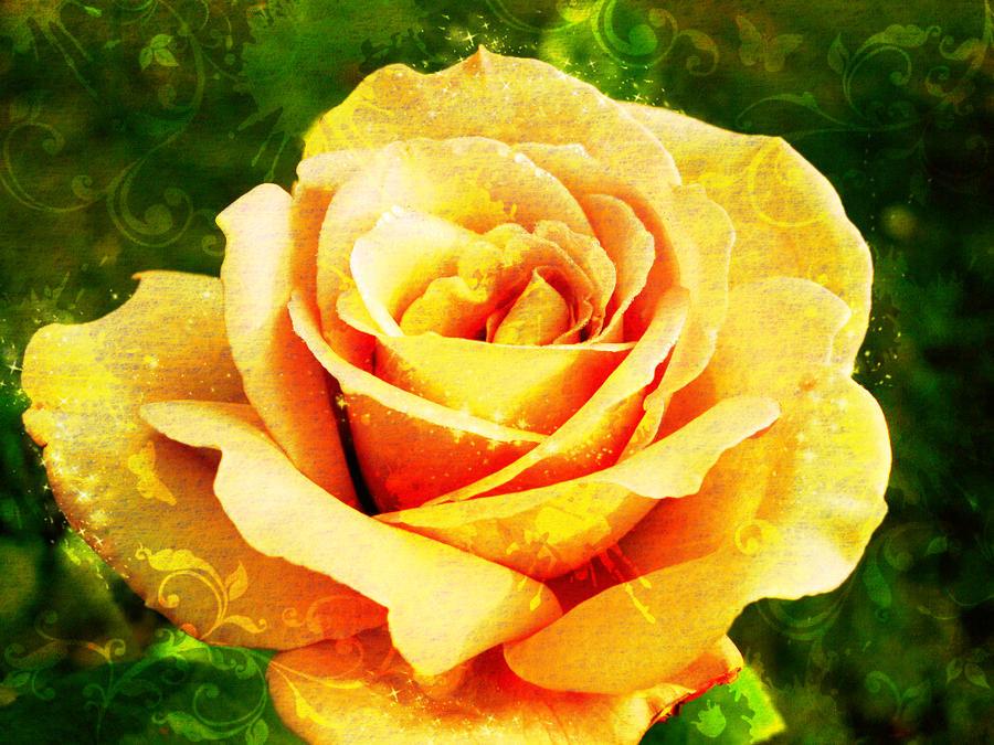 Golden Rose Wallpaper Golden Rose by Annael 88