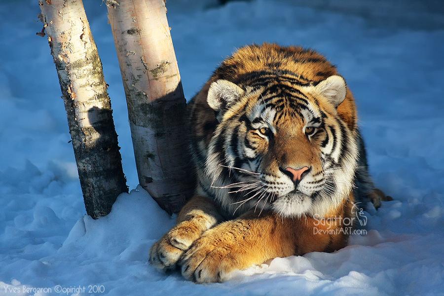 Дневник большой кошки