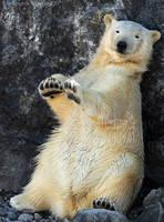 TamTam Bear by Sagittor