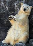 TamTam Bear