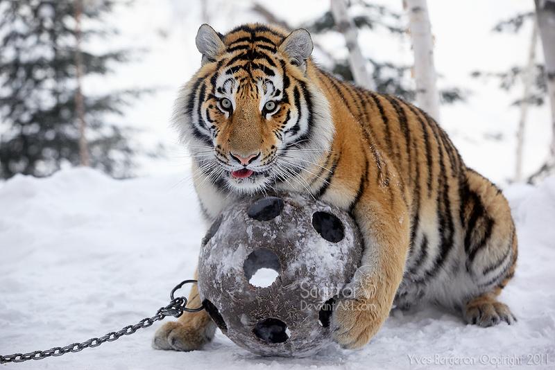 Amurshaya With Ball II by Sagittor