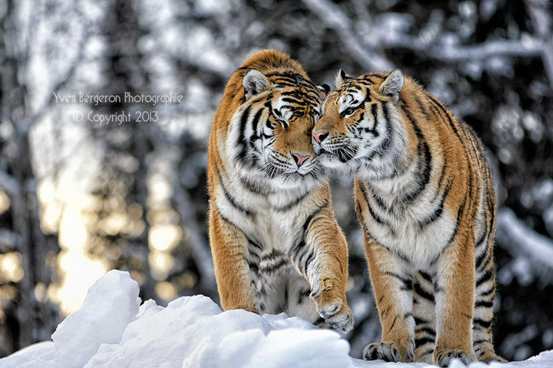 Sweet Lovers III by Sagittor