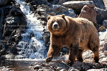 Grizzly Paradise
