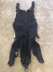 FOR SALE juvenile black bear by CaptainSaviathan