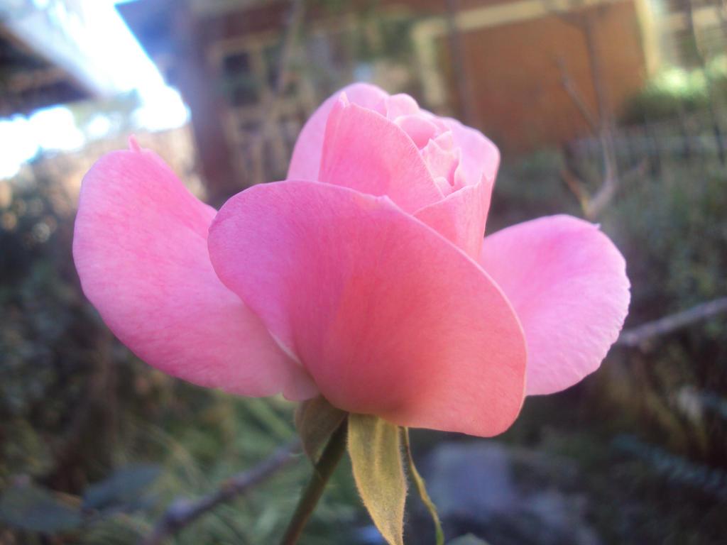 Little pink flower by KariaHearts on DeviantArt