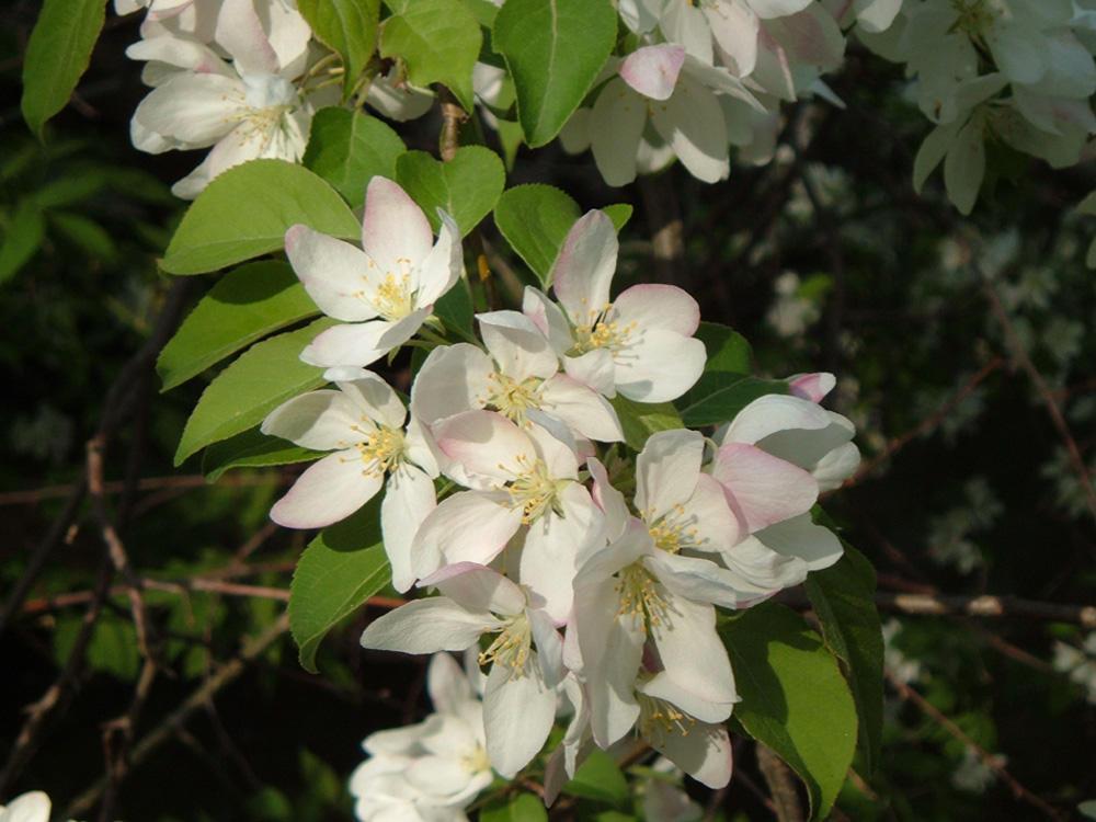 White Flower by endofwar