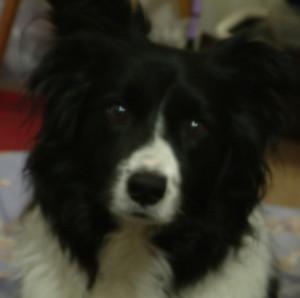 pat219's Profile Picture