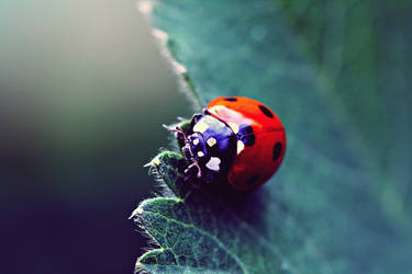 melancholic ladybug by AlleyCat91