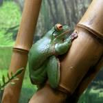 Static Tree Frog