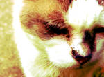 The Disgruntled Feline