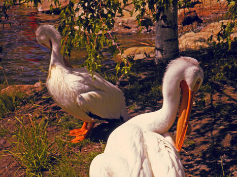 Peckings