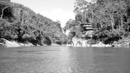 Madre de dios , parc national de Manu,  Amazonia